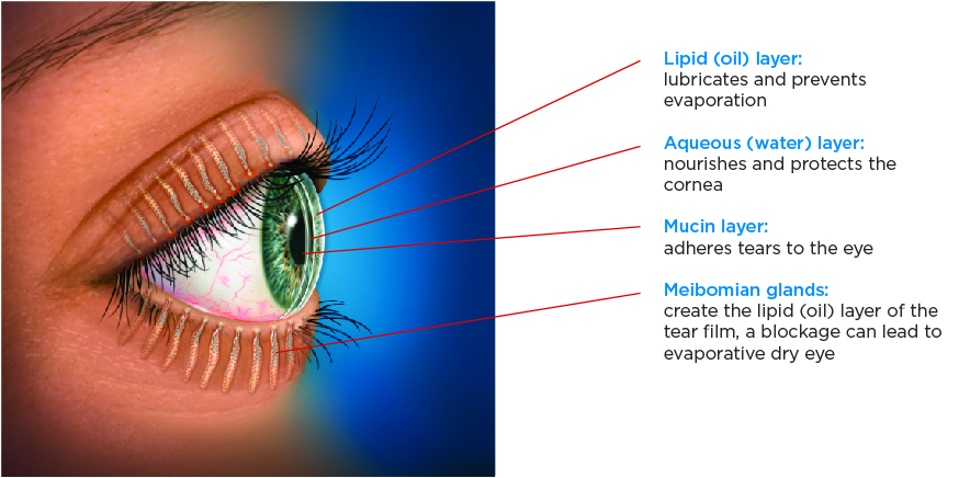 Side view of an eye with tear film anatomy.